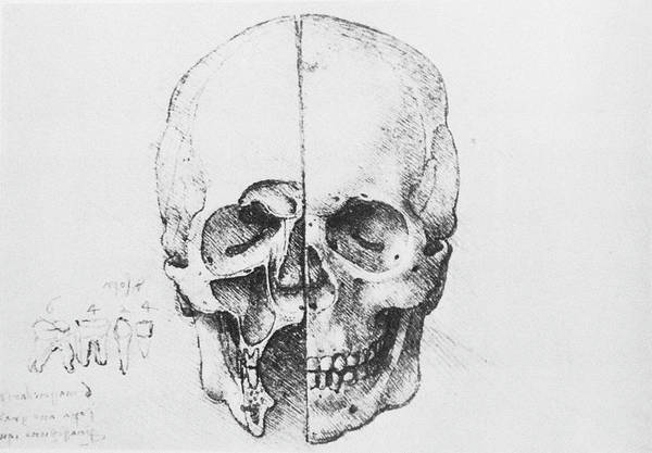 Photograph - Skull And Teeth Anatomy by Science Photo Library