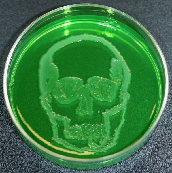Wall Art - Photograph - Skull by Gregory Lab/microbialart.com/science Photo Library