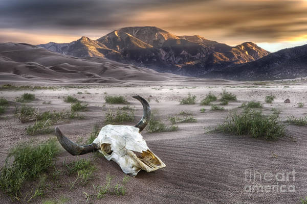 Wall Art - Photograph - Skull In The Desert by Jerry Fornarotto