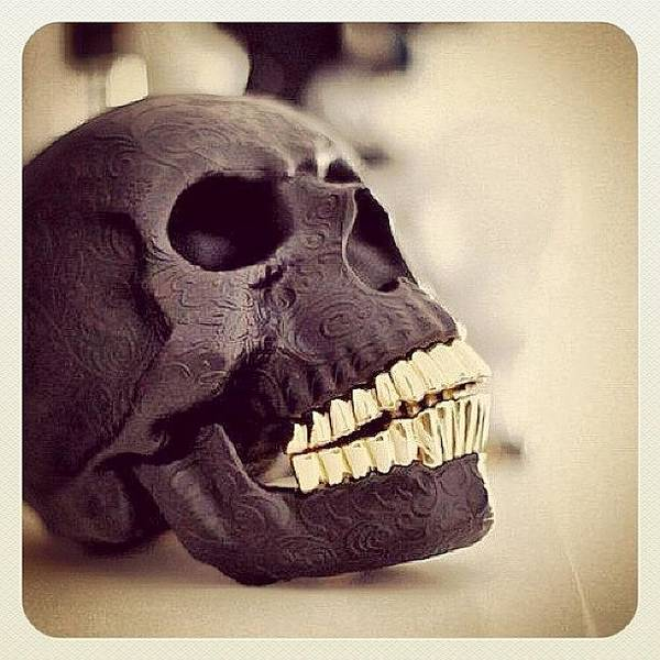 Wall Art - Photograph - Skull by Marina Boitmane