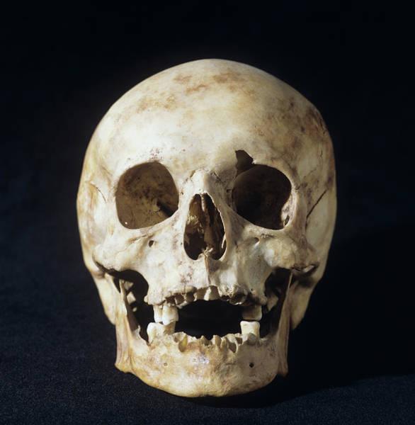 Homo Sapiens Photograph - Skull Of Modern Human by Daniel Sambraus/science Photo Library