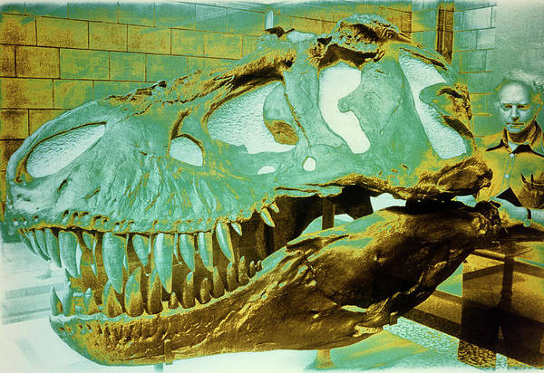 Rex Photograph - Skull Of Tyrannosaurus Rex by Sinclair Stammers/science Photo Library.