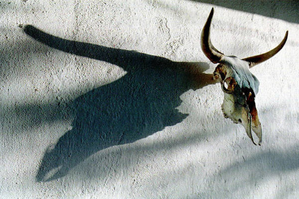 Photograph - Skull Shadow by Tam Ryan