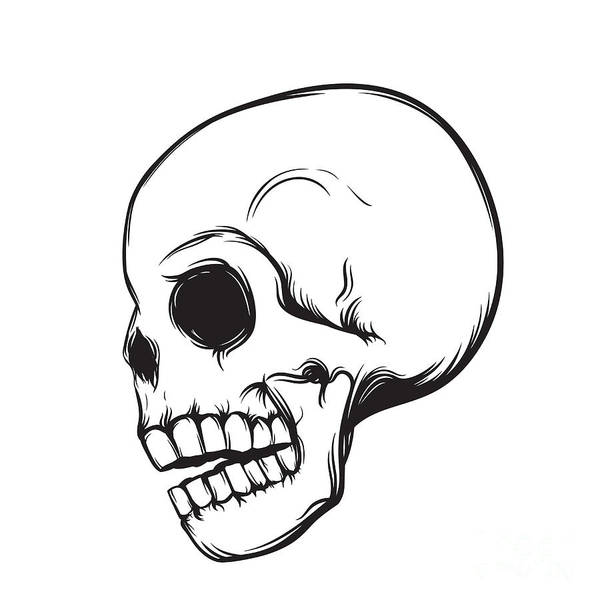 Wall Art - Digital Art - Skull, Side View, Isolated On White by Nexusby
