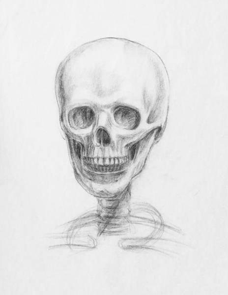 Drawing - Skull Study by Irina Sztukowski
