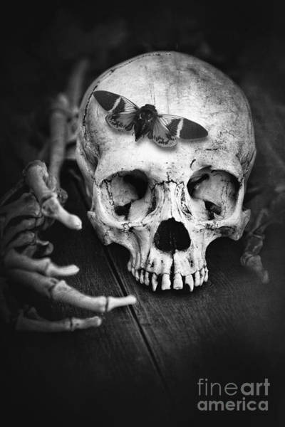 Photograph - Skull With Cicada And Skeleton Hands by Sandra Cunningham
