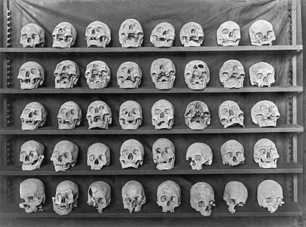 Deadhead Wall Art - Photograph - Skulls On Display by Underwood Archives
