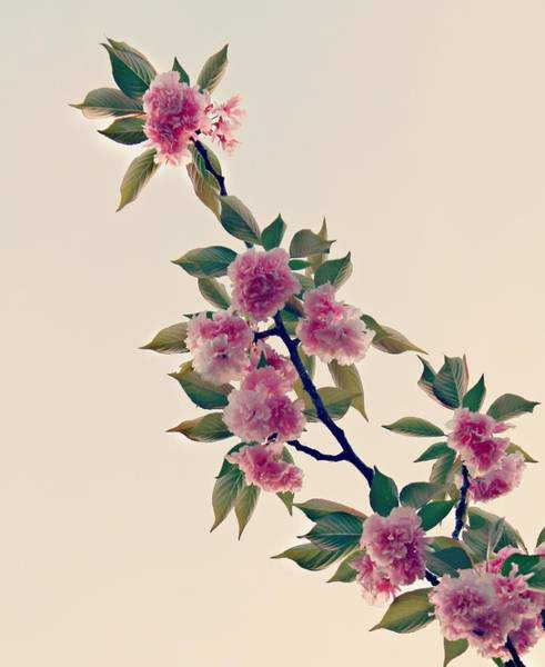 Photograph - Sky Bloom by Candice Trimble