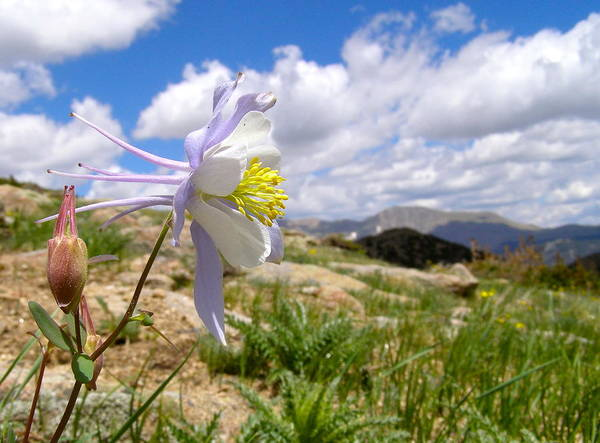 Photograph - Sky Blossom  by Alan Johnson