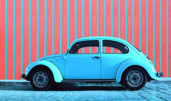 Pink Photograph - Sky Blue Bug by Laura Fasulo