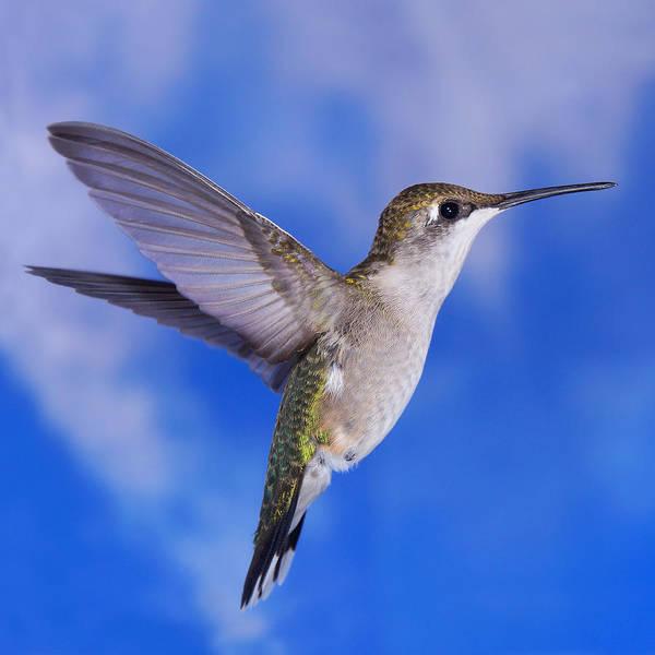 Photograph - Sky Blue Flyer 3 by Leda Robertson