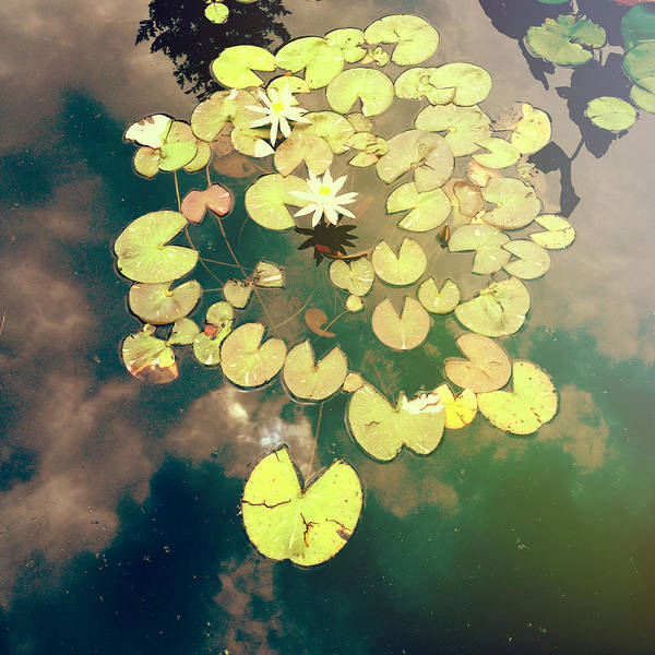Water Lilies Photograph - Sky Dance by Olivia StClaire