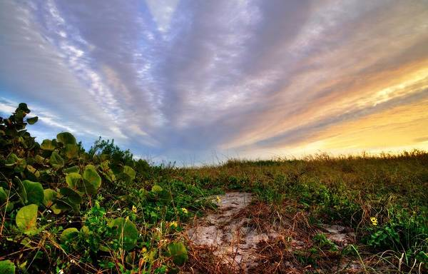 Photograph - Sky Explosion Over Delray Dunes by Lynn Bauer