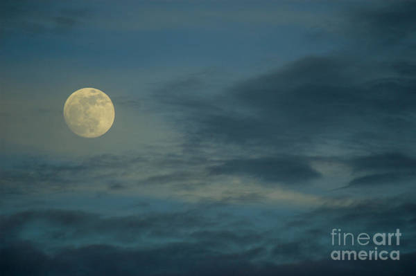Photograph - Sky Moon by Dale Powell