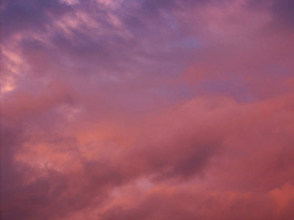 Wall Art - Photograph - Sky Song by Laurie Stewart