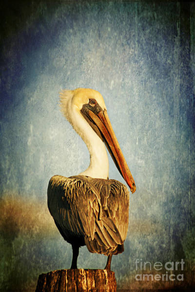 Brown Pelicans Wall Art - Photograph - Sky Watcher by Joan McCool