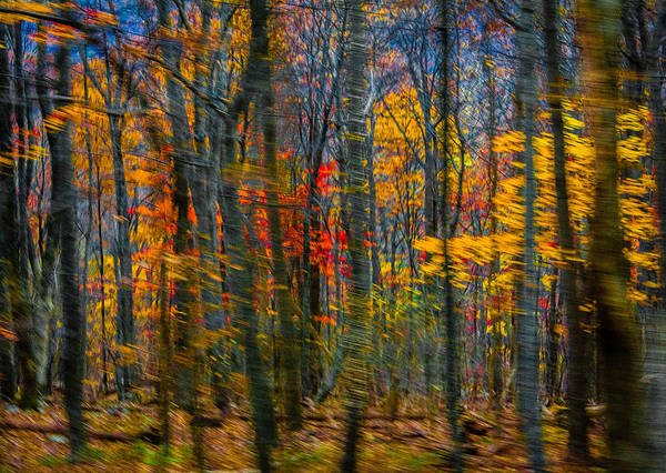 Photograph - Skyline Drive 1 by Karen Saunders