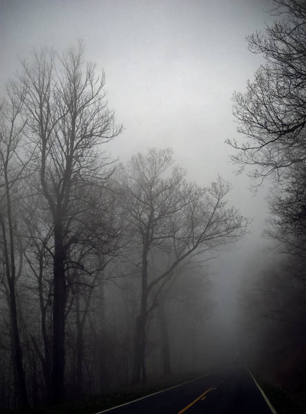 Photograph - Skyline Drive In Fog by Greg Reed