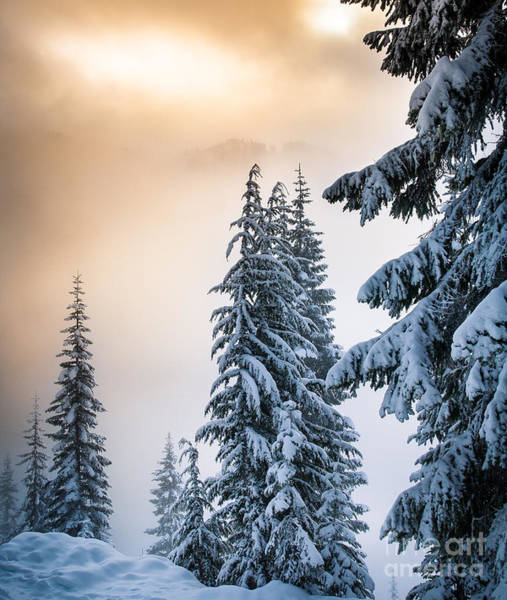 Western Pacific Photograph - Skyline Lake Forest - January by Inge Johnsson