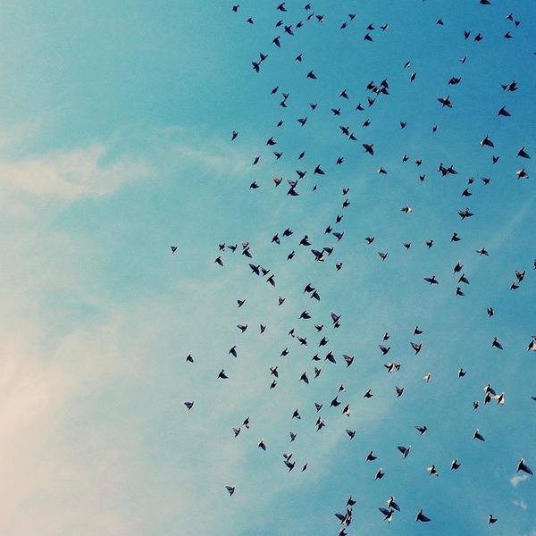 Photograph - Skys The Limit by Juj Winn