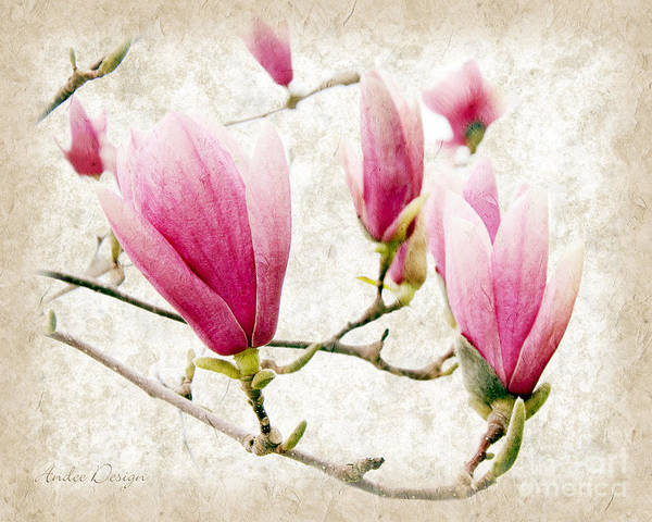 Photograph - Skyward Magnolia Painterly 3 by Andee Design