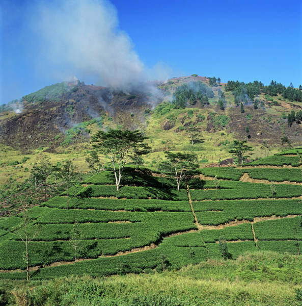 Wall Art - Photograph - Slash And Burn Agriculture by Mark De Fraeye/science Photo Library