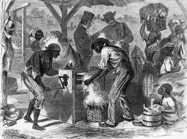 Wall Art - Photograph - Slaves Using Cotton Gin Machine by Library Of Congress/science Photo Library