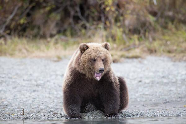 Photograph - Sleep Bear by Kevin  Dietrich
