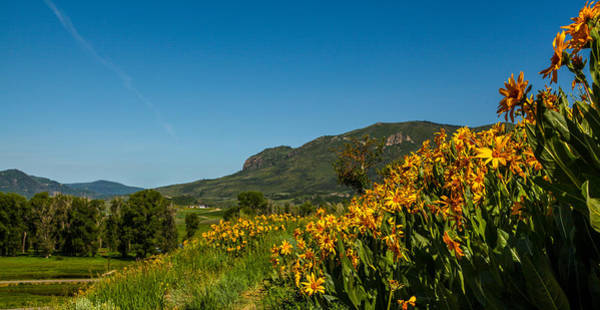 Photograph - Sleeping Giant Wildflowers by Kevin  Dietrich