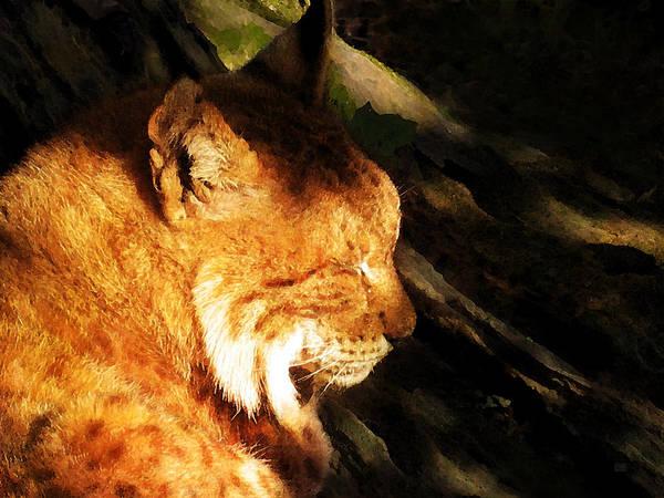 Painting - Sleeping Lynx  by Menega Sabidussi