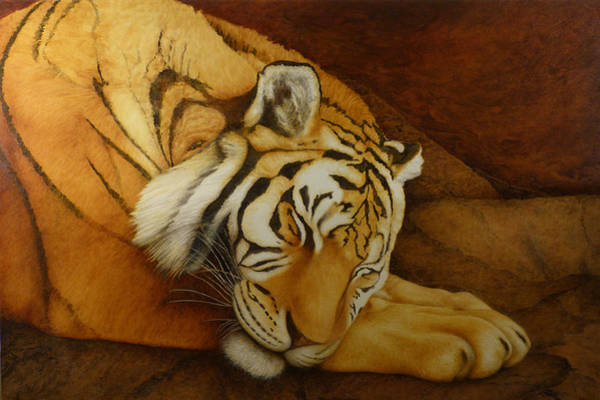 Acrilic Painting - Sleeping Tiger by Norm Holmberg