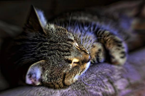 Photograph - Sleepy Cat by Dan McManus