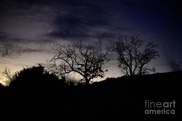 Photograph - Sleepy Silhouette  by Bridgette Gomes