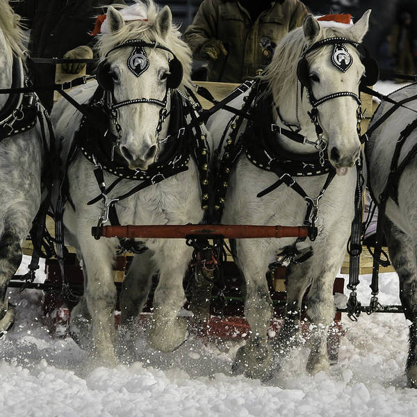 Photograph - Sleigh Ride by Curtis Dale