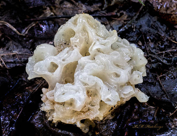 Wall Art - Photograph - Slimy Fungus by Keith Hutchings