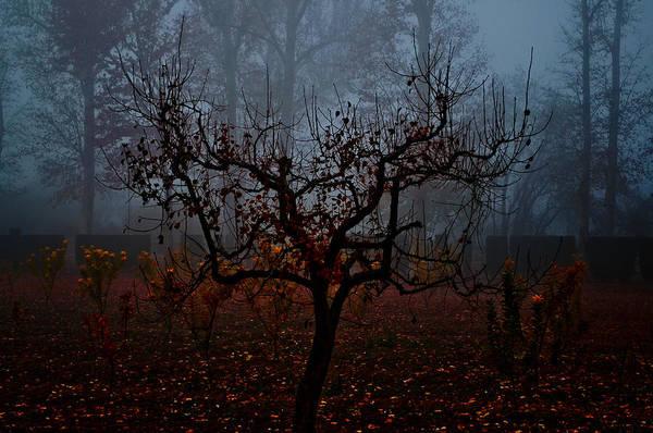 Niebla Wall Art - Photograph - Slitary Tree by Aurelio Bello