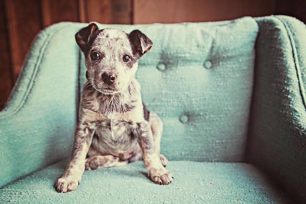 Armchair Photograph - Sly Dog by Sara Mcdaniel