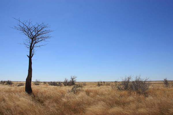 Botswana Photograph - Small Baobab by Elne Burgers