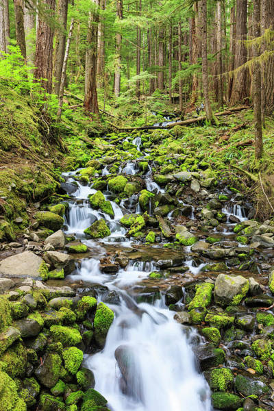 Ecosystem Photograph - Small Creek With Waterfall by Tom Norring