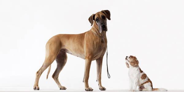Small Dog Looking At Bigger Dog Art Print by Martin Barraud