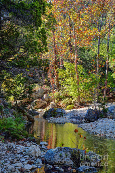 Lost River State Park Wall Art - Photograph - Small Pond At Lost Maples by Savannah Gibbs
