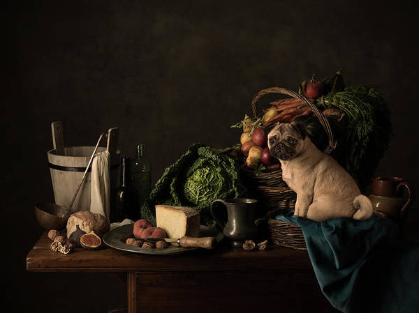 Bucket Photograph - Small Pug Dog On A Rustic Kitchen Table by Tim Platt