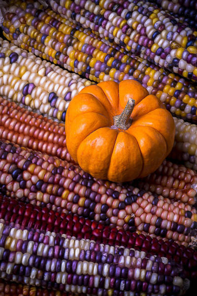 Indian Corn Photograph - Small Pumpkin With Indian Corn by Garry Gay