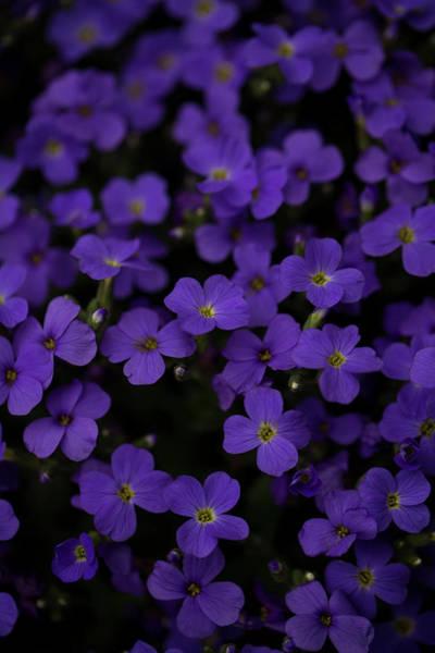 Hessen Photograph - Small Purple Blossoms. Rhoen Mountains by Sebastian Kujas
