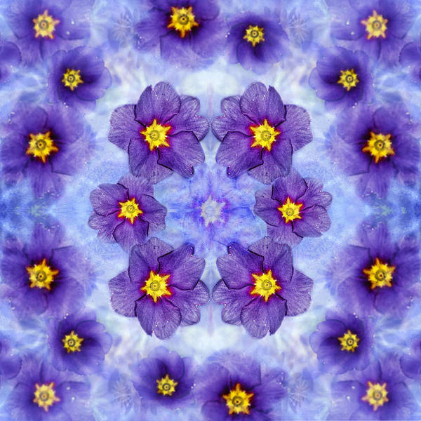 Photograph - Small Purple Flowers - Medium by Belinda Greb
