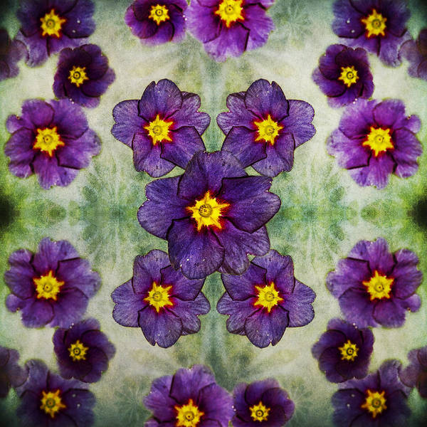 Photograph - Small Purple Flowers Version 2 by Belinda Greb