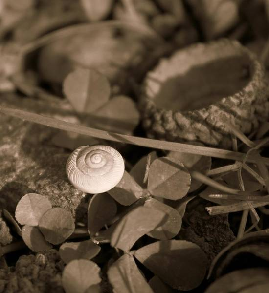 Photograph - Small Things Matter by Candice Trimble