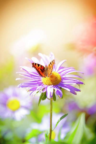 Tortoiseshell Photograph - Small Tortoiseshell Butterfly by Pawel.gaul