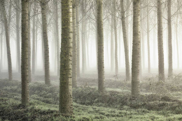 Woods Photograph - Small Woodland by Fiorenzo Carozzi