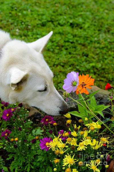 Photograph - Smell The Flowers by Thomas R Fletcher